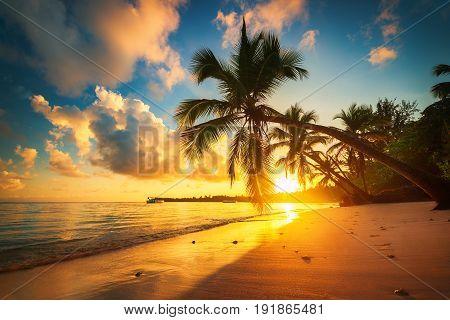 Tropical beach in Punta Cana Dominican Republic