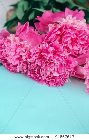 Beautiful fresh pink peony flower on mint background. Peonies summer.pink peonies pattern