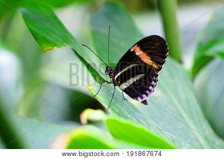 Butterfly, butterflies, nature, conservatory, leaf, savage, green, vibrant, insect, bug, beautiful, living, live, black, orange, white
