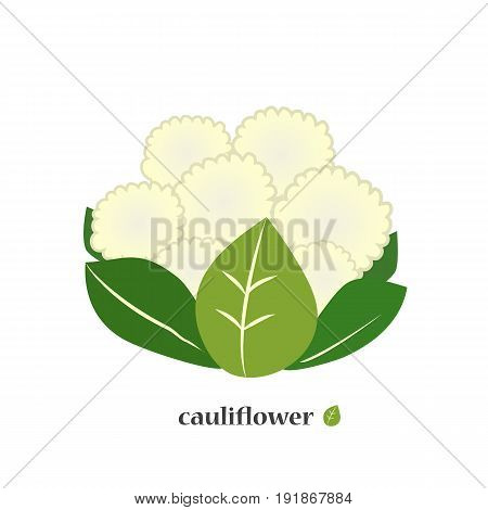 Cauliflower. Cabbage icon closeup. Isolated on a white background. Vector illustration