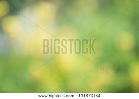 Abstract Natural Background Defocused, Defocused Bokeh