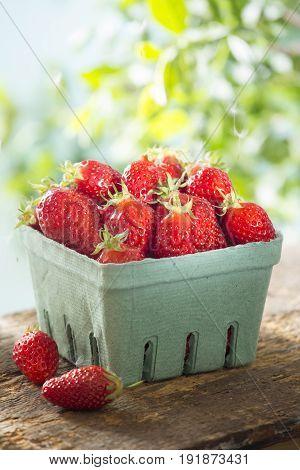 Punnet of fresh strawberries on sunny summer day