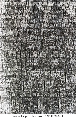 Texture Of Bark Of Wood Tree On Gray
