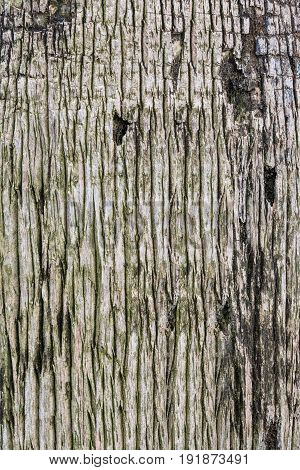 Texture Of Old Tree Bark With Green And Black Tones