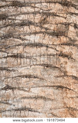 Texture Of Palm Bark, With Light Brown Colors