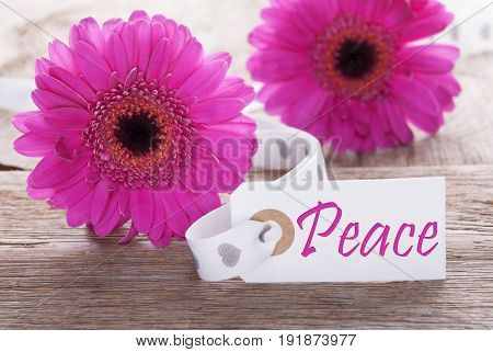 Label With English Text Peace. Pink Spring Gerbera Blossom. Vintage, Rutic Or Aged Wooden Background. Card For Spring Greetings.