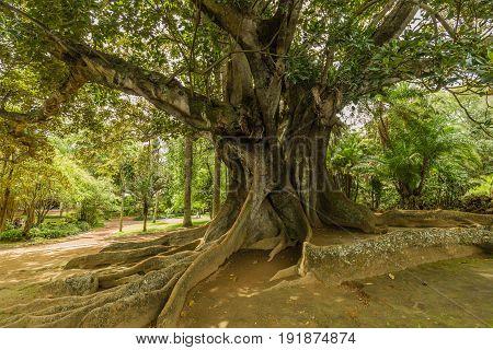 Antonio Borges Botanical Garden In Ponta Delgada