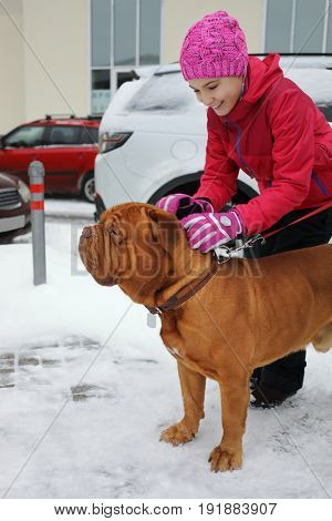 Happy girl strokes brown bulldog on snow at winter day near building, cars