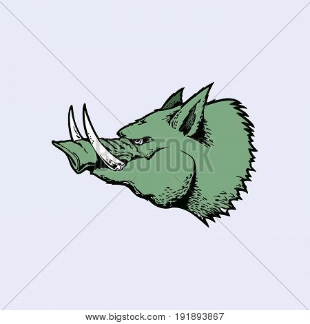Angry of head wild hog mascot. cartoon character