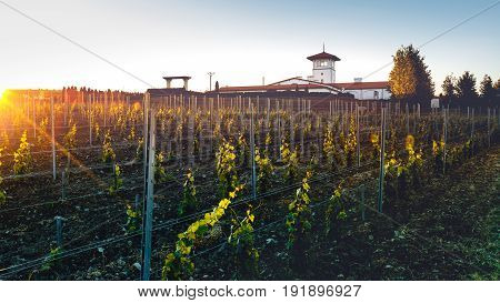 Vineyards And Winery In Soft Sunlight Picturesque Rural Landscape Concapt