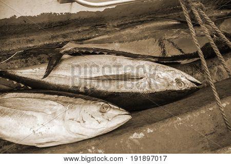 Tuna Fresh Fish For Sale At Fish Market In Male,maldives