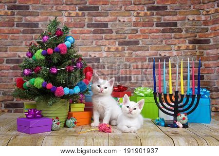 Two white kittens sitting on a wood floor Miniature Christmas tree on viewers left with menorah on the right. Pop-culture combination of Christmas and Hanukkah. Chrismukkah.