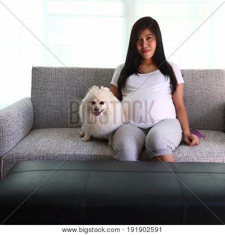Woman Pregnant 9 Month And Pomeranian Dog Cute Pets
