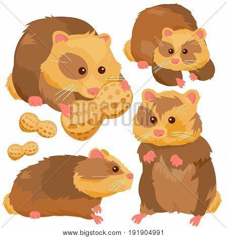 Vector illustration set of cute pet hamsters.