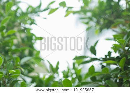Abstract Blur Green Bokeh In Greenery Nature Background