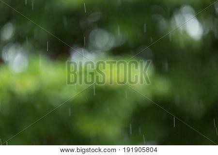 Rain Drop With Green Bokeh Nature Background