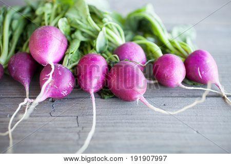 Fresh bunch of harvested radish