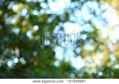 Abstract Sunlight Through Tree Green Lush Nature, Image Blur Light Bokeh Background