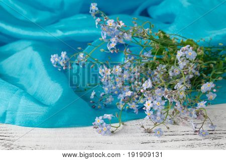Beautiful forget me not blossoms flowers on blue
