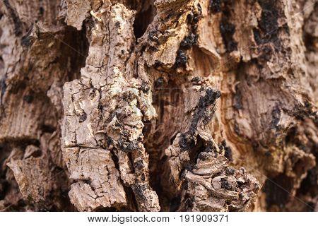 close up dry broken bark tree texture