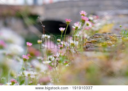 Beautiful flowers field at Bruges (Brugge) with water canal and bridge, Flanders, Belgium, spring season. Shallow depth of field.