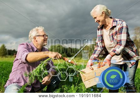 organic farming, agriculture and people concept - senior couple with box for vegetables picking carrots at farm