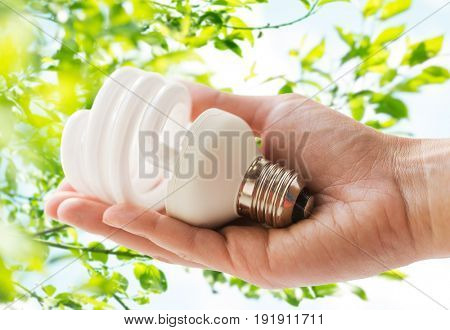 recycling, electricity and ecology concept - close up of hand holding energy saving lightbulb or lamp over green natural background