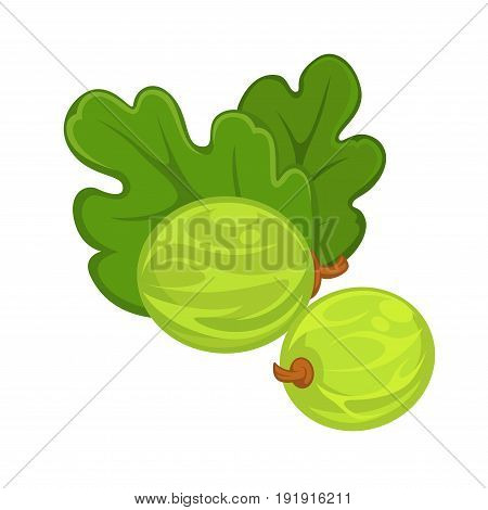 Two gooseberries with leaves in green color isolated on white. Close up vector colorful poster in flat design of summer seasonal berries growing on bushes. Healthy eating template with berries group