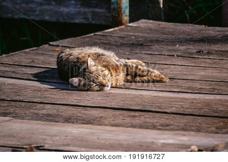 Cat on the wooden floor sleeping in the sun. Copy space.