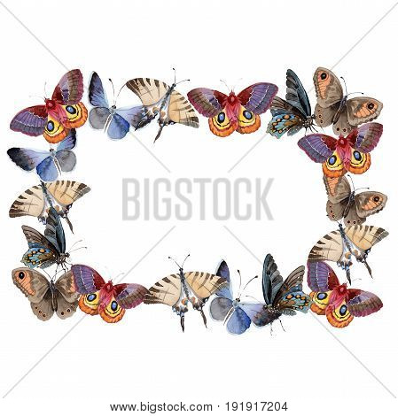 Watercolor butterfly wreath tender insect, intresting moth, isolated wing illustration. Butterfly names: swallowtail, monarch, queen. Aquarelle for background, wrapper pattern, frame or border.