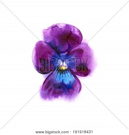 Beautiful watercolor Pansy. Hand-drawn illustration for your design.