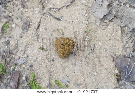 Dog poo laid on a foot path above view shallow depth of field