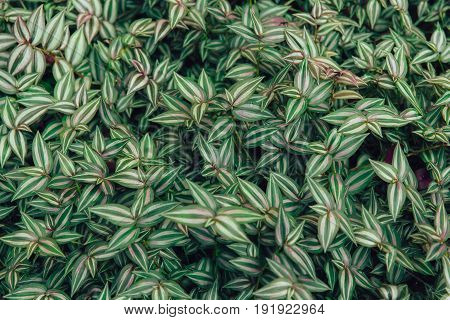 green leaf plant texture pattern leaves vintage colortone.
