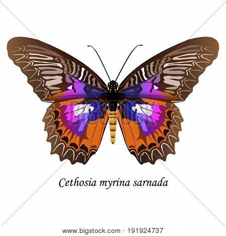 Illustration of Sulawesi butterfly of the Nymphalidae family - Cethosia myrina sarnada. Element for design. ClipArt. The element of training patterns biological descriptions etc.