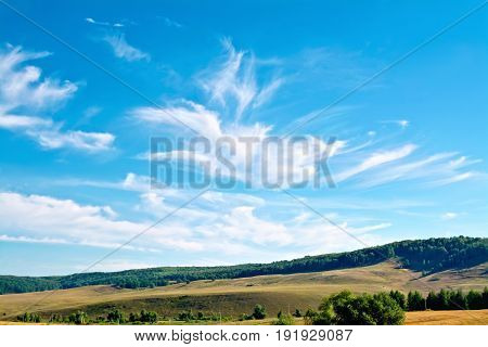 Summer landscape with field, trees on a hill, blue sky and white clouds