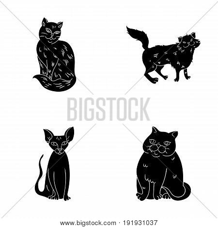 Sphinx, nibelung, norwegian forest cat and other species. Cat breeds set collection icons in black style vector symbol stock illustration .
