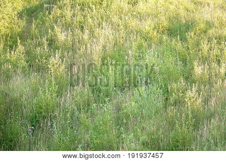 Side view to the grass meadow background