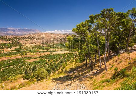 Landscape view of the upcountry of the island of Crete with olive trees and mountains in the background Greece