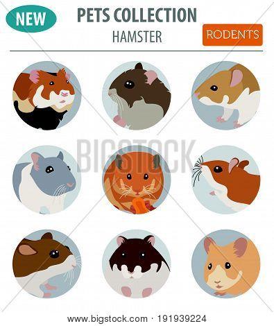 Pets_rodents_rat_6