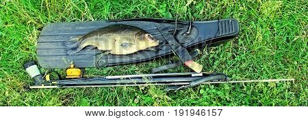 Spearfishing. Fish and equipment for spearfishing on the grass