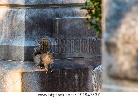 The squirrel sitting on the ledge of the marble tombstone in the shadow