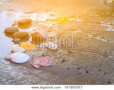 Shells on the sand On a sunny day. Flare light.