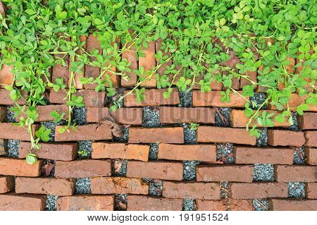 Background of orange bricks decorated on floor covered by green leaves