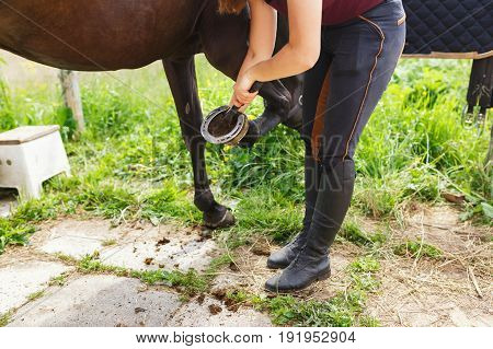 Girl is cleaning a horse's hoof before the training outdoors