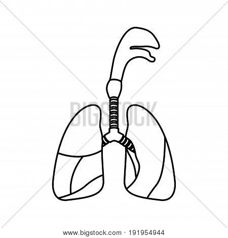 sketch silhouette respiratory system with windpipe vector illustration