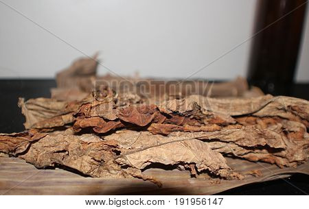 dried up tobacco leaves pile of dried tobacco leaves spread out on a table
