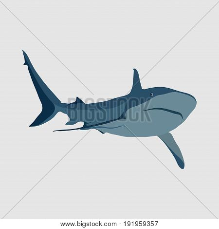 shark on a white background. shark attack danger in the ocean. marine animal flat design image