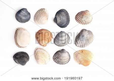 Group of seashells isolated on a white background