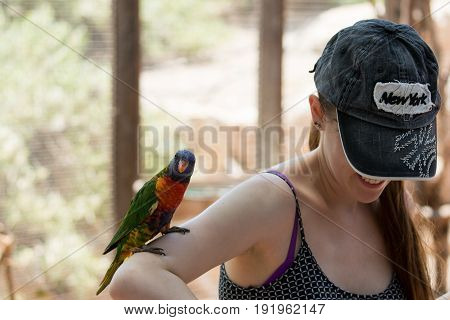 Kibutz Nir David Israel June 10 2017 : Parrot sits on the hand of a young woman at the Australian Zoo Gan Guru in Kibbutz Nir David in Israel