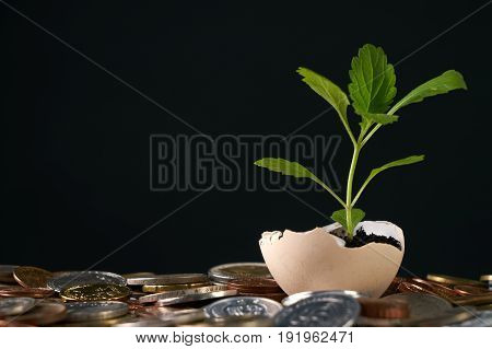 Coins and plant in eggshell isolated on black background with copy space. Concept with stacked copper coins which symbolizes a profitable business success fortune luck happiness.